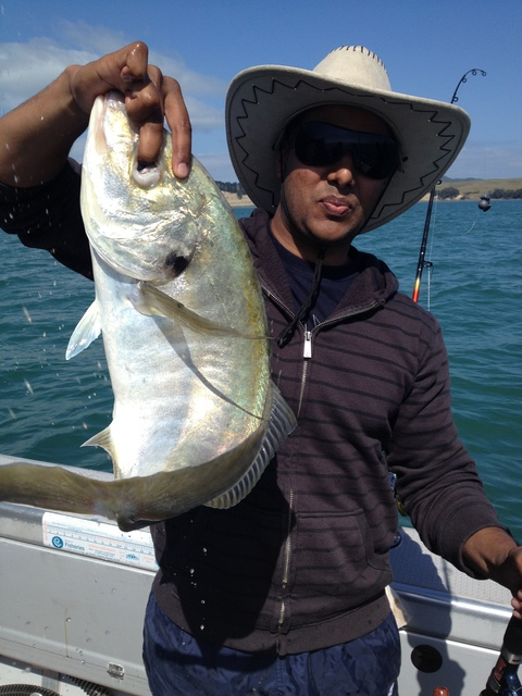 Trevally from Waiheke Channel