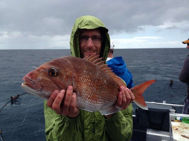 Snapper in Auckland